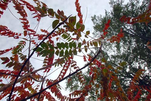 autumn trees tree fall colors leaves boston forest ma leaf massachusetts harvard arnold arboretum foliage harvarduniversity bostonma 2009 arnoldarboretum emeraldnecklace cameranikond50 exif:exposure_bias=0ev exif:exposure=0004sec1250 exif:focal_length=18mm treemuseum lens18200vr exif:aperture=f80 camera:make=nikoncorporation exif:flash=offdidnotfire camera:model=nikond50 meta:exif=1257920846 exif:lens=18200mmf3556 exif:filename=dscjpg exif:vari_program=auto exif:shutter_count=36764 meta:exif=1350400835