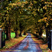 A LEAFY AVENUE by Edward Dullard Photography. Kilkenny, Ireland.
