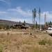 Angora Fire Survey Site C