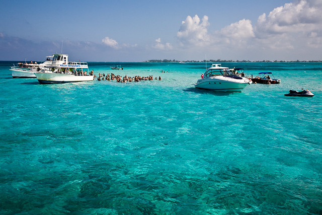 Stingray Swim Cayman Islands