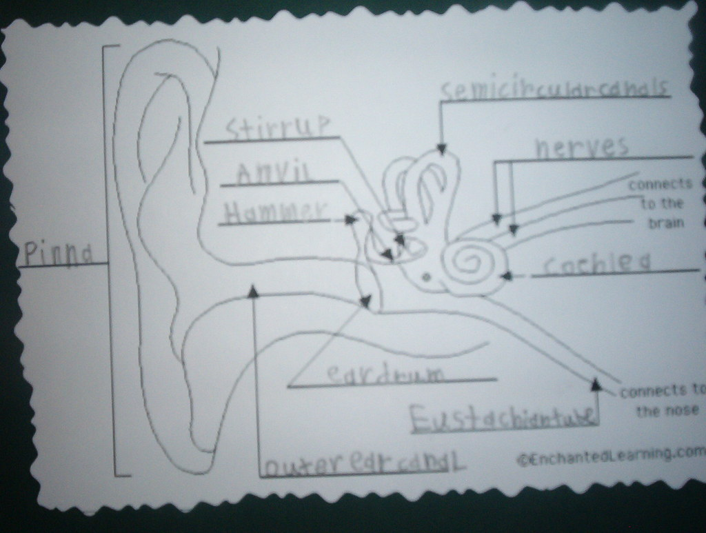 Human ear diagram labeled ear diagram ccuart Choice Image
