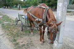 Cavalo nas ruas de Comrat na Gagauzia