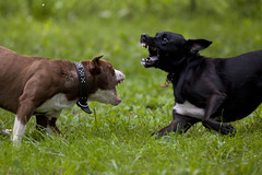 Dog Fight 1