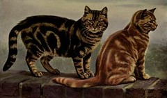 bengal(0.0), savannah(0.0), european shorthair(0.0), egyptian mau(0.0), ocicat(0.0), animal(1.0), toyger(1.0), small to medium-sized cats(1.0), pet(1.0), pixie-bob(1.0), fauna(1.0), american shorthair(1.0), cat(1.0), carnivoran(1.0), whiskers(1.0), domestic short-haired cat(1.0),