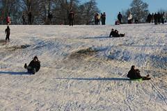 Sledging, Christchurch Park, Ipswich, 19 December 2009
