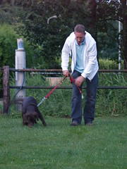 Getting The Most Out Of Your Dog Training Efforts 2