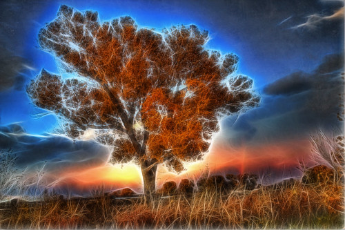 sunset newmexico tree albuquerque filter cottonwood fields nm joeldeluxe 2009 hdr fractalius