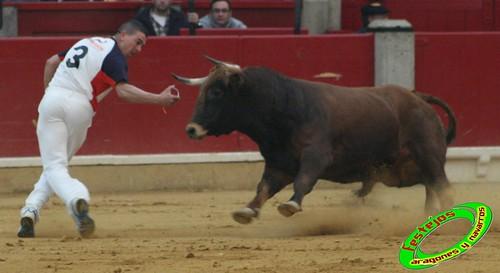Zaragoza concurso de recortadores anillas con toros - Ramon soler madrid ...