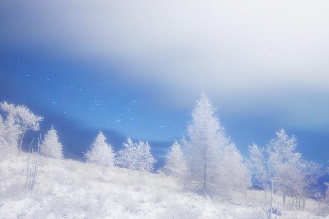 ☆Christmas trees land☆