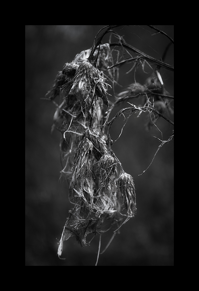 Photography: Carcass by Nicholas M Vivian