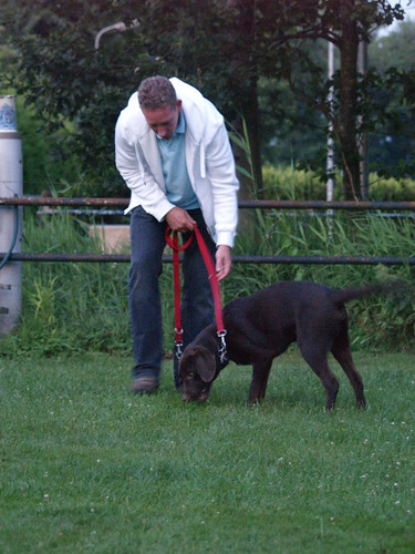 Great Tips To Help Train Your Dog 2