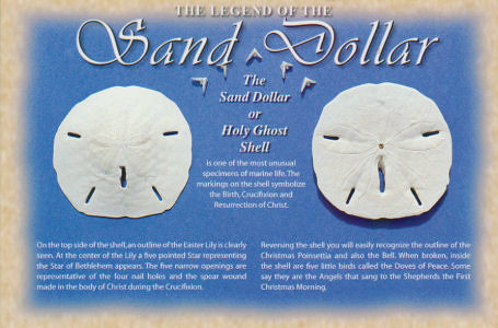 Sand Dollar Legend Not Available | Flickr - Photo Sharing!