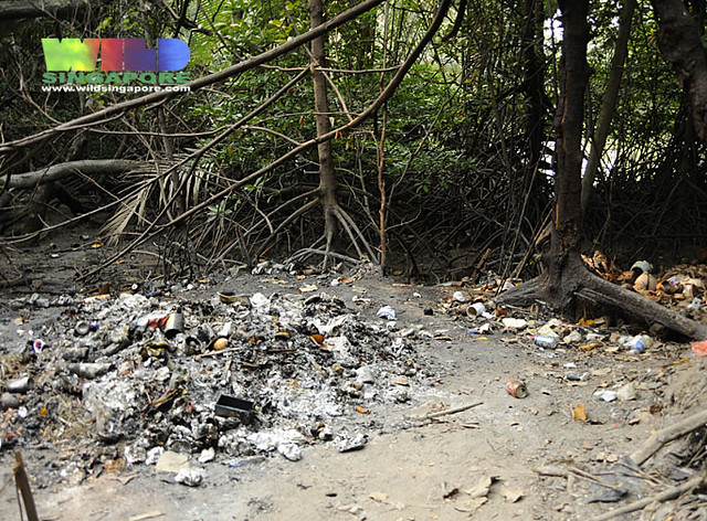 Burning site within the mangroves