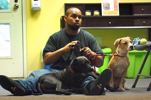 Terapia assistida com animais