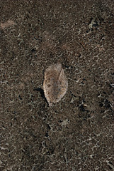 Leaf in Dry Creekbed