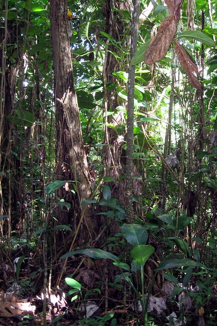 Rain forest definition meaning for Forest floor definition