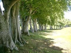 09 0733m - trees by Peel Ring, Lumphanan