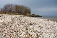Cockle Beach
