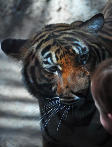 endangered species animals