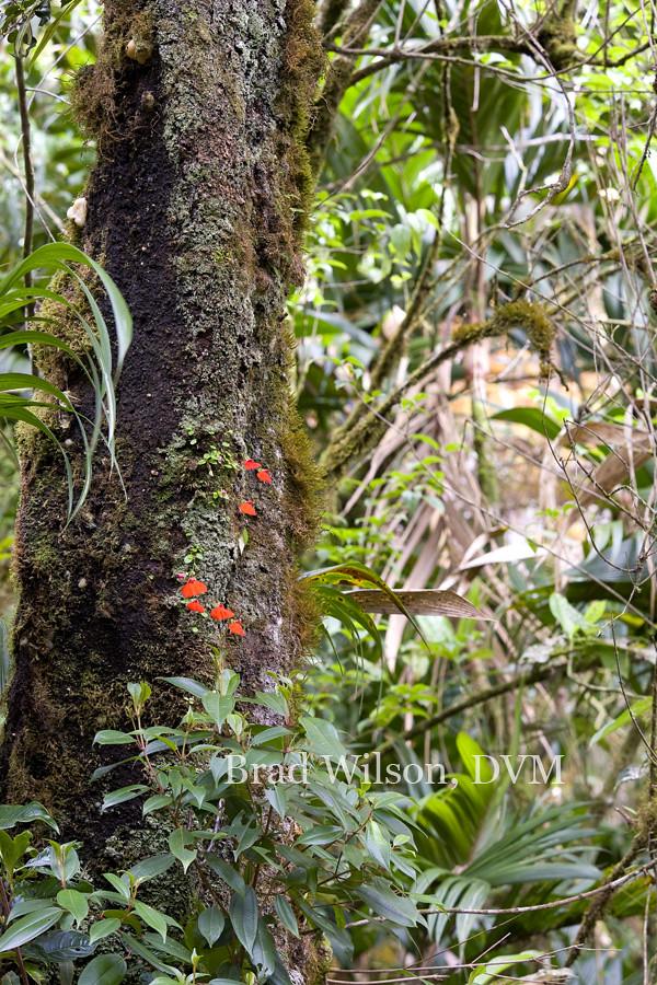 Carnivores et orchidées in situ  5766475407_2143d450f4_b