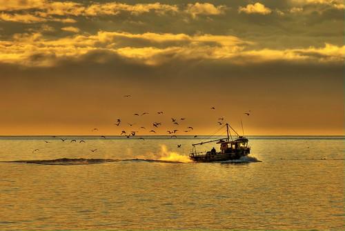 pictures sky seagulls fish canada beach water beautiful sunrise photo amazing fishing sand scenery rocks waves bc photos pics britishcolumbia gulls awesome scenic victoria explore vancouverisland westcoast islandviewbeach saanichton nikond700 vosplusbellesphotos ireenaeleonora