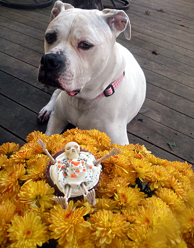 Layla and the Devil's Food Halloween Cupcake with Buttercream Frosting and Skeletons!