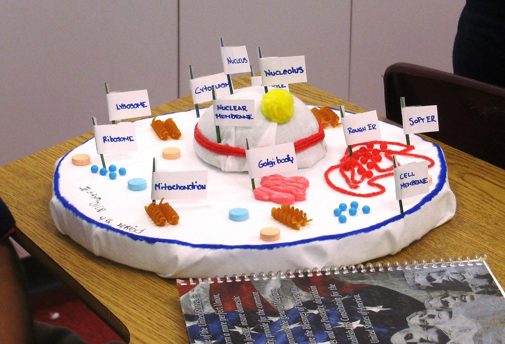 cell project Name:_____ due date:_____ 3-d plant cell model project rubric grading: you will initially start with a 100 for your project grade.
