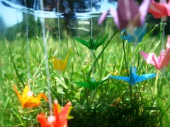 Paper Blue 1 Photos | Rainbow Crane Jar - Field | 273
