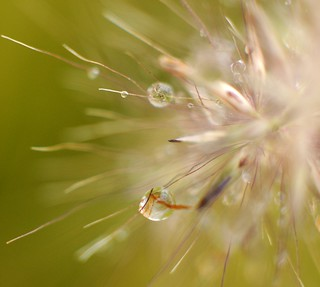 Drops on Autumn Grass