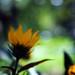 Flores del Central by BatiChango