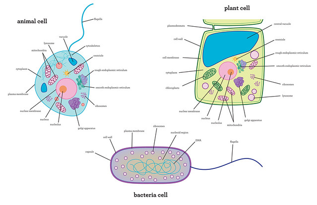 Biology homework helpchelicerates