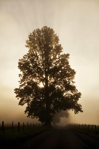 road usa tree fog sunrise strada alba tennessee nebbia albero cadescove greatsmokymountainsnationalpark massimostrazzeri ziomamo gettymaypriv