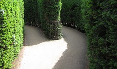 Maze at Hampton Court Palace