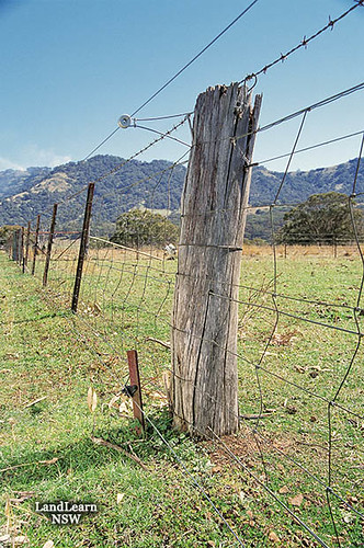 Sheep  Goat Fence - Fencing Materials Distributor | Louis E. Page