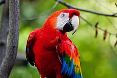 Toronto Zoo-parrot