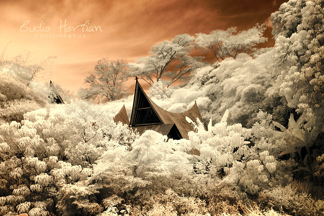 Flickr Spotlight – InfraRed Madness