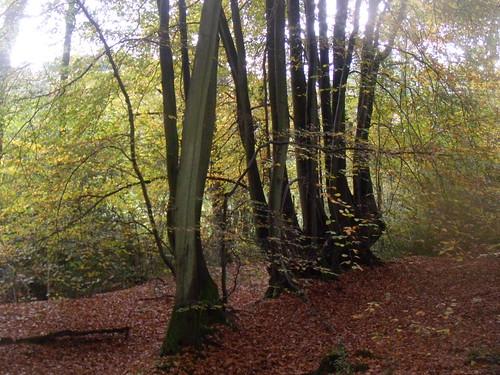 Autumn trees 7