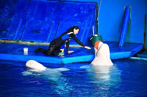 7T24海生館-白鯨-玩球