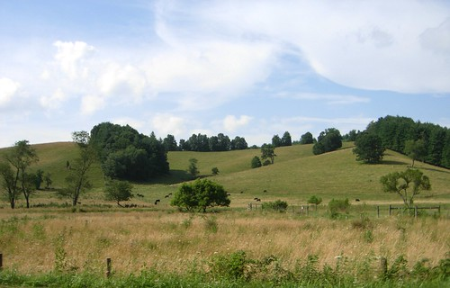 trees shadow sky field grass landscape virginia cattle cows air meadow peaceful hay colline