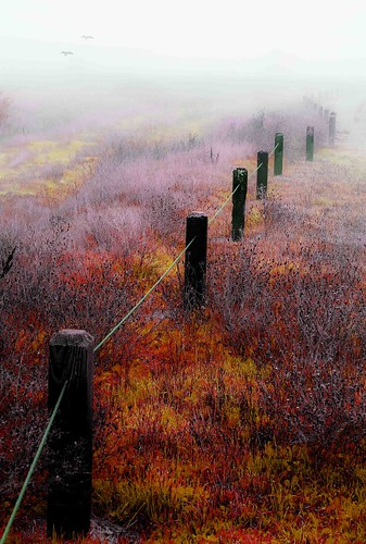 red orange fall grass yellow fog fence season weeds fallcolors elkgroveca nikond80 ericaustria