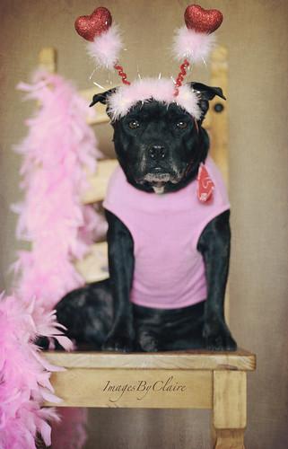 HBM - Pink pooch edition