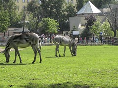 A trip to Moscow Zoo - Things to do in Moscow