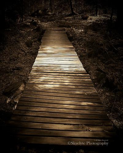 bridge copyright nature sepia forest waterfall spring hiking terryvillect mattatucktrail dedicatedtodon buttermilkfallsconnecticut whereyouleadiwillfollowyou takenapril212008