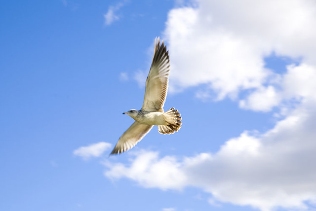 Oiseau qui vole a photo on flickriver for Photo oiseau