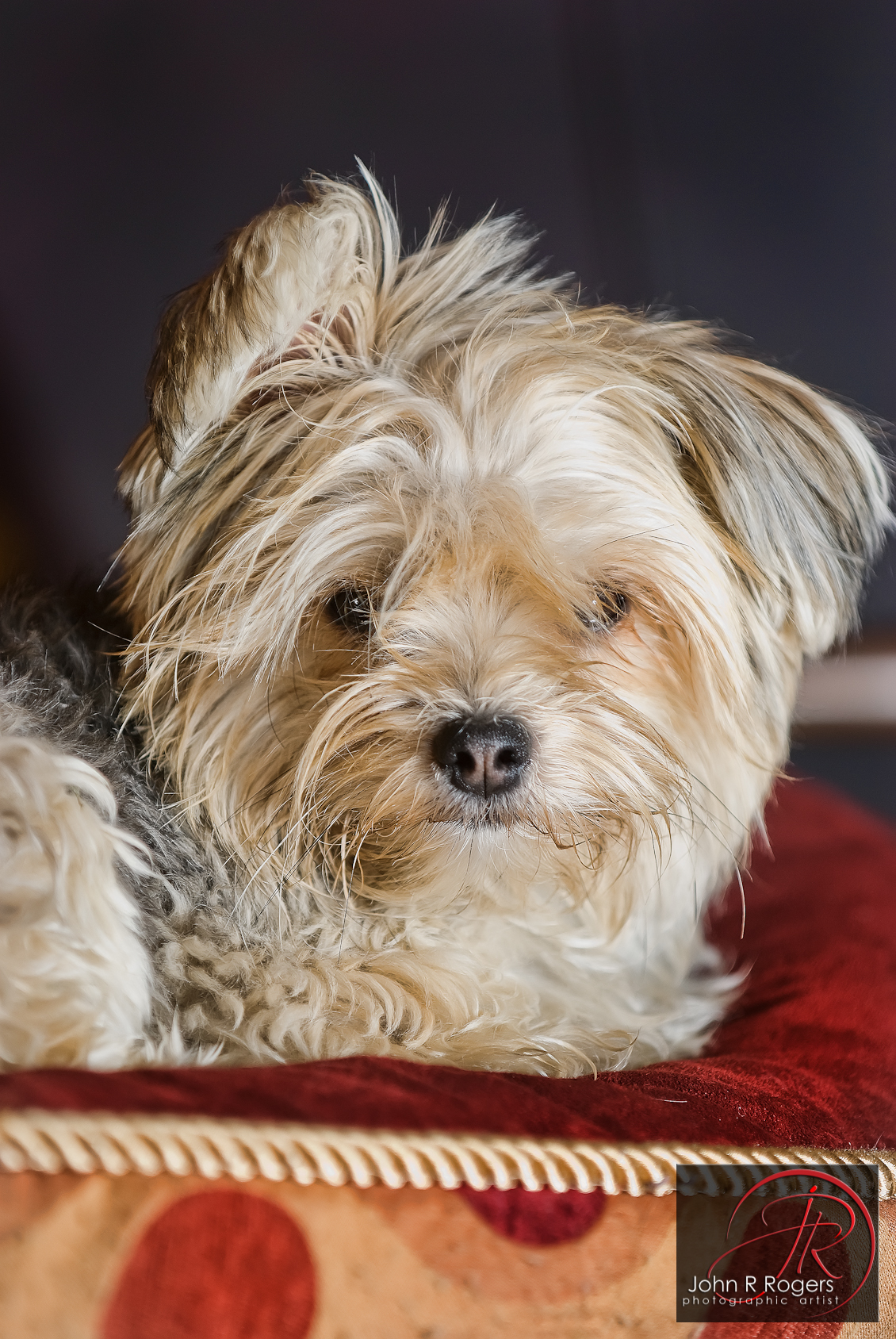 Bella's Dog Portrait