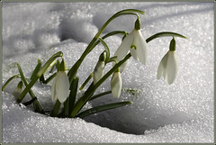 After Winter..................Spring.