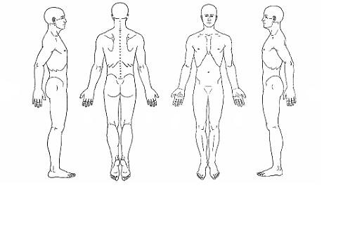 body chart, Muscles