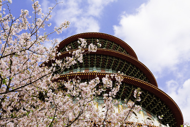 Cherry Blossom and the Temple 櫻花與天壇