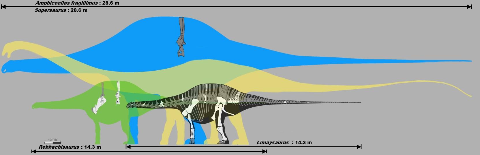 was amphicoelias a rebbachisaur by palaeozoologist on