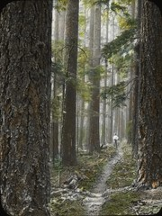 Typical Oregon forest: enchanting and peaceful